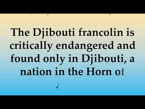 Cool, Funny and Fun Facts about Djibouti