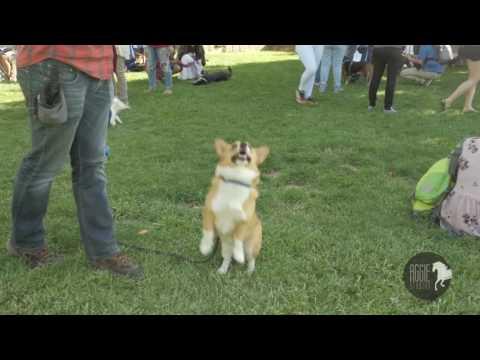 PSSD Fun Dog Show 2017