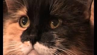 Клип с кошкой Мусей (музыка М.Мусоргского)