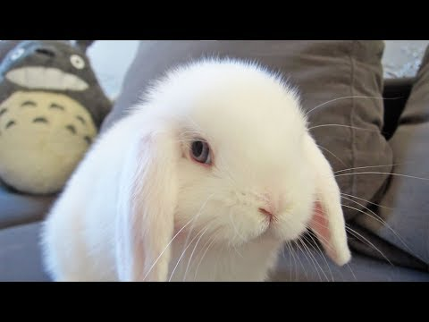 Bunny Cant Get Enough of the Sofa!