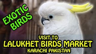 Lalukhet Birds Market Karachi Pakistan | Sunday Bird Market Karachi | Video in Urdu/Hindi