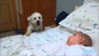funny dog trying to see the baby on the bed fail cloud