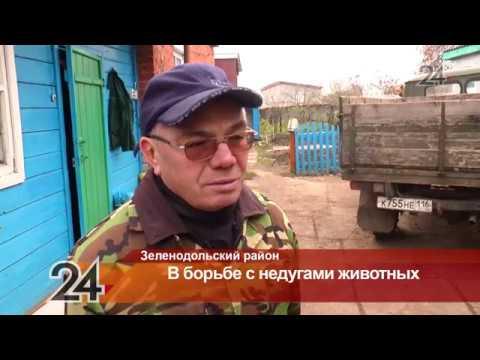 В Татарстане появится скорая помощь для животных