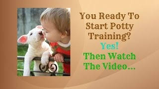 Bull Terrier Dog Breed: How To Potty Train A Bull Terrier Puppy - Bull Terrier Housebreaking Tips