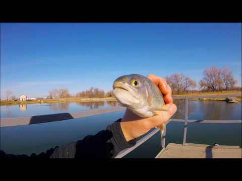 Jigging For Rainbow Trout In Hudson, CO