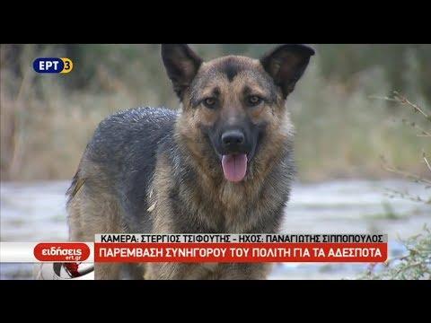 11.000 αδέσποτα σκυλιά