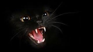 Black Cat 01 napisy  PL anime-odcinki.pl
