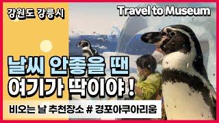 강릉여행/경포아쿠아리움/강릉가볼만한곳/강릉맛집