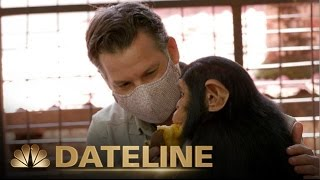 On Assignment | Richard Engel Meets Orphaned Baby Chimps from the Congo | Dateline NBC