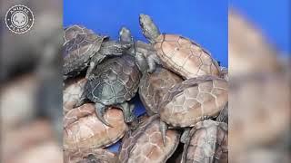 Эти удивительные животные. Увлекательная подборка интересных видео.