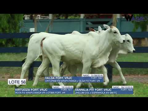 LOTE 56   FORT 7467,7611,7635