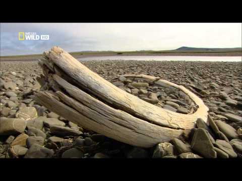 Ruská divočina - Arktida