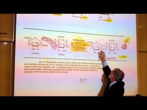 BIOLOGICAL CHEMISTRISTY; PART 1; MONOSACCHARIDES & DISACCHARIDES by Professor Fink