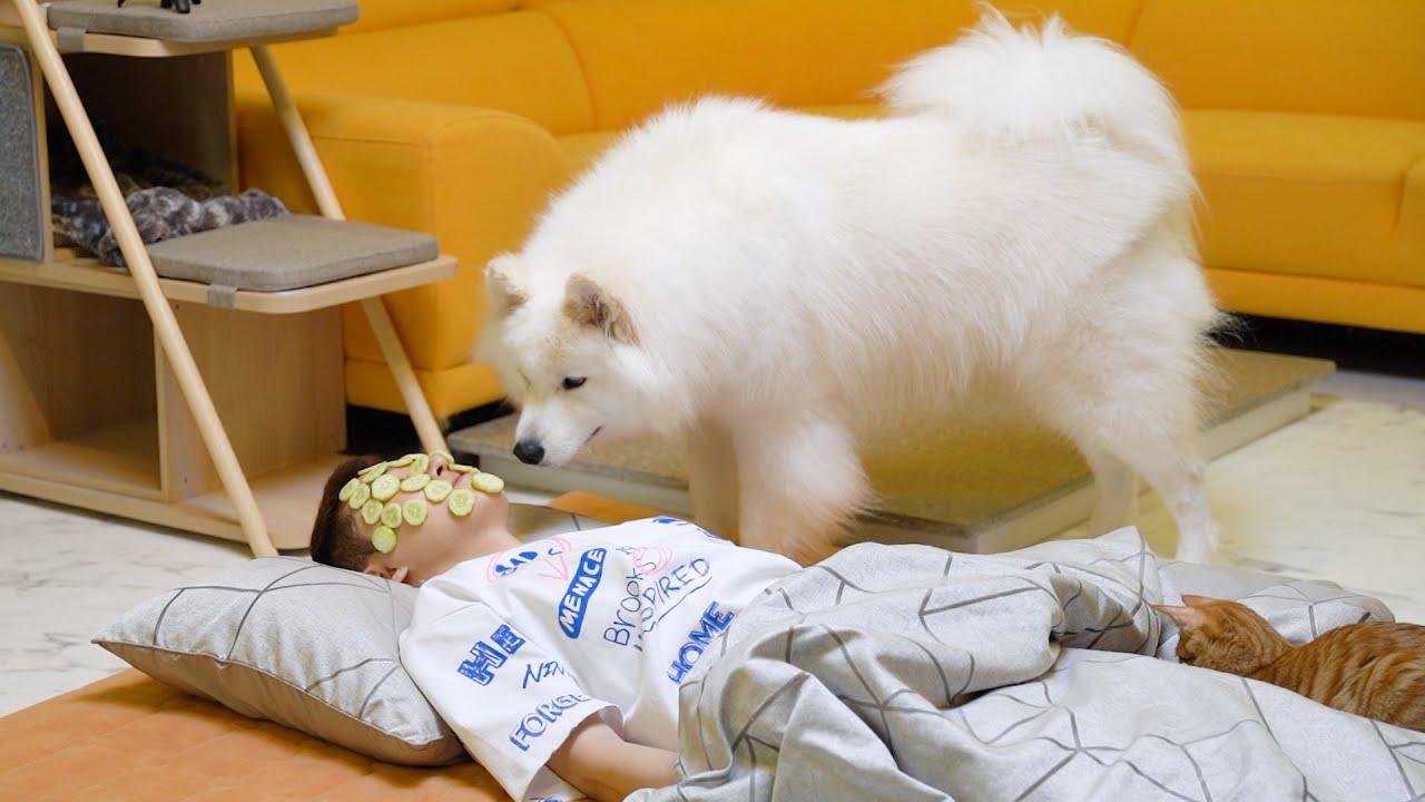 강아지 앞에서 오이팩을 하고 잠든 척을 해봤더니?ㅋㅋㅋ