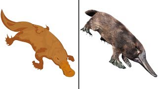 Duck + Beaver + Reptile + Otter + Chicken - Meet The Platypus | Amazing Facts Of The Unusual Mammal