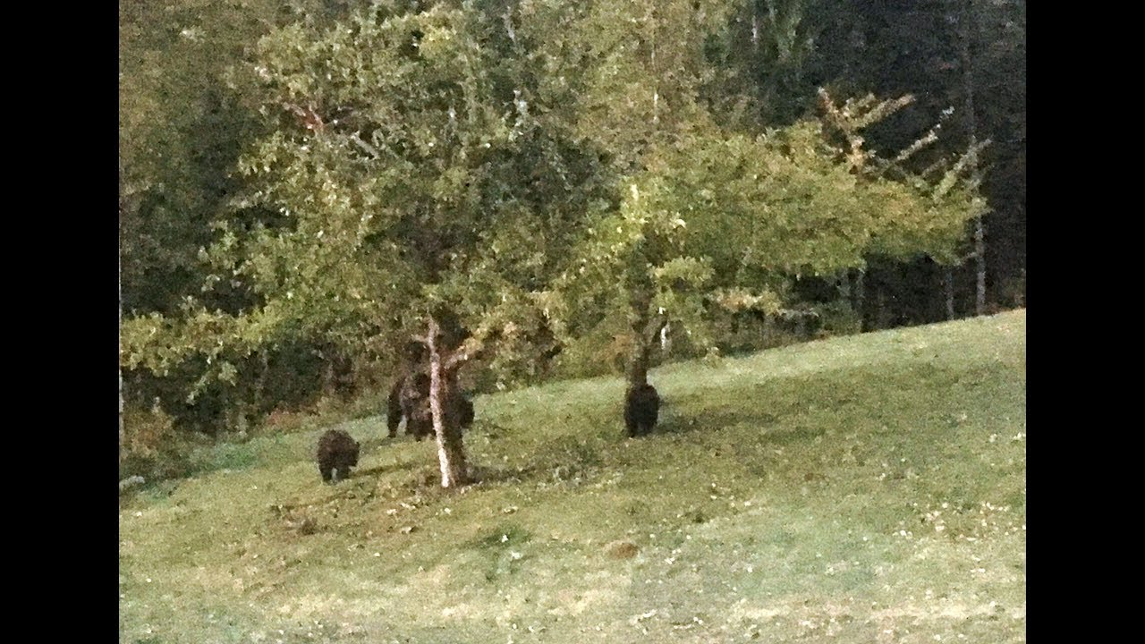 Man Tried To Scare A Family Of Grizzlies Off His Property But The Mother Bear Charged & Things..