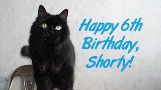 Happy 6th Birthday, Shorty!