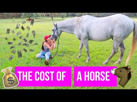 The Cost Of A Horse | Beginner's Guide To Horses Pt. 2