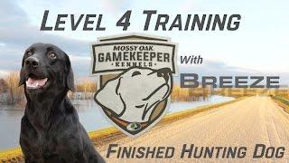 Finished Hunting Dog Training