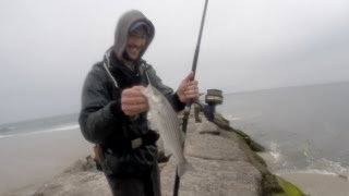 Striper Fishing  ( Oh XXXX! GOT HIM )  Striper's on the Fly & Penn 706Z