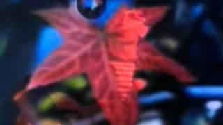 Lightning Seeds - Pure (Subtitulos en Español) HQ