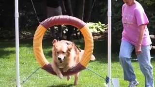 Meet Canine Companions Dog Training School!