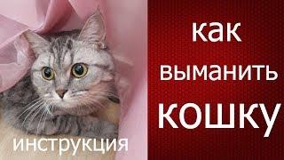 Лайфхак инструкция: как выманить и поймать кота, кошку из укрытия с помощью игрушки.