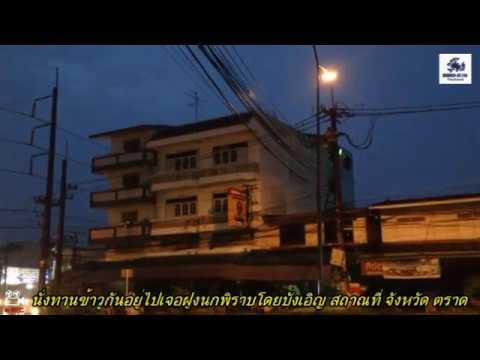 รีวิว วิธีไล่นกพิราบ ด้วย เลเซอร์ไล่นก โดย Bird-X Thailand