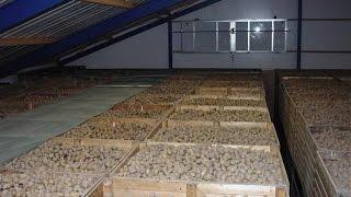 видео Вентиляция овощехранилищ и картофелехранилищ