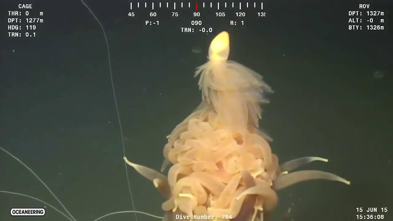 amazing deep sea creatures youtube