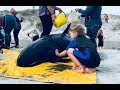 day in the unschooling life saving whales unschool nz ditl