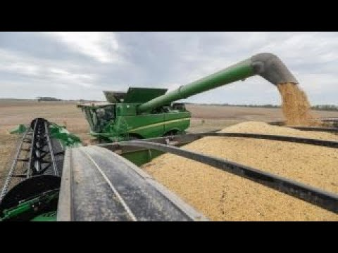 Iowa soybean farmer says Trump's tariffs have hurt soybean prices