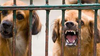 Video 5 Warga Bali Terjangkit Rabies akibat Digigit Anjing download MP3, 3GP, MP4, WEBM, AVI, FLV Agustus 2018