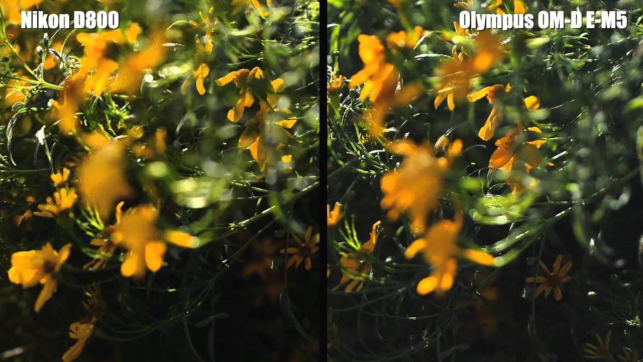 Nikon D800 Vs Olympus Om D E M5 Shootout Video Youtube