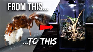 How to Raise an Ant Colony 101 | The Ultimate Guide to Keeping Pet Ants