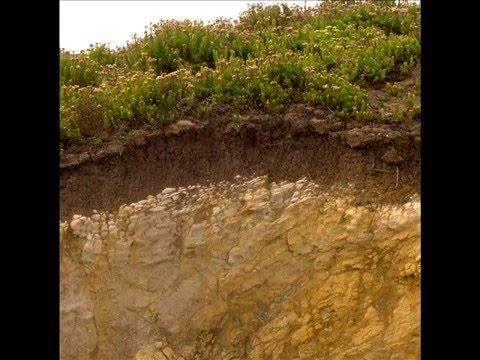 Geolog a tarea n 3 suelos definici n formaci n tipos de for Formacion de los suelos