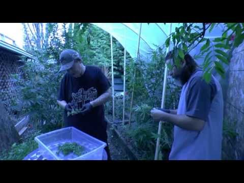 Green House Harvest , Grow Your Own Medicine