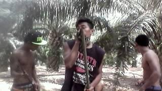 Lagu sasak lombok D sawit band