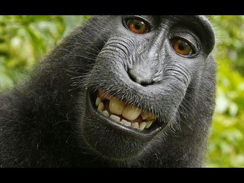 animales fotos mas chistosas del mundo www