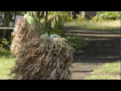 Village Life on Ambrym Island - Vanuatu
