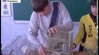Первый канал  Бедные мышки! разговор о правильном питании