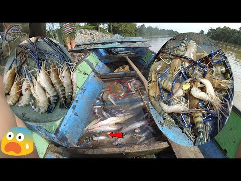 Pesta Udang Galah Monster 2019 #82