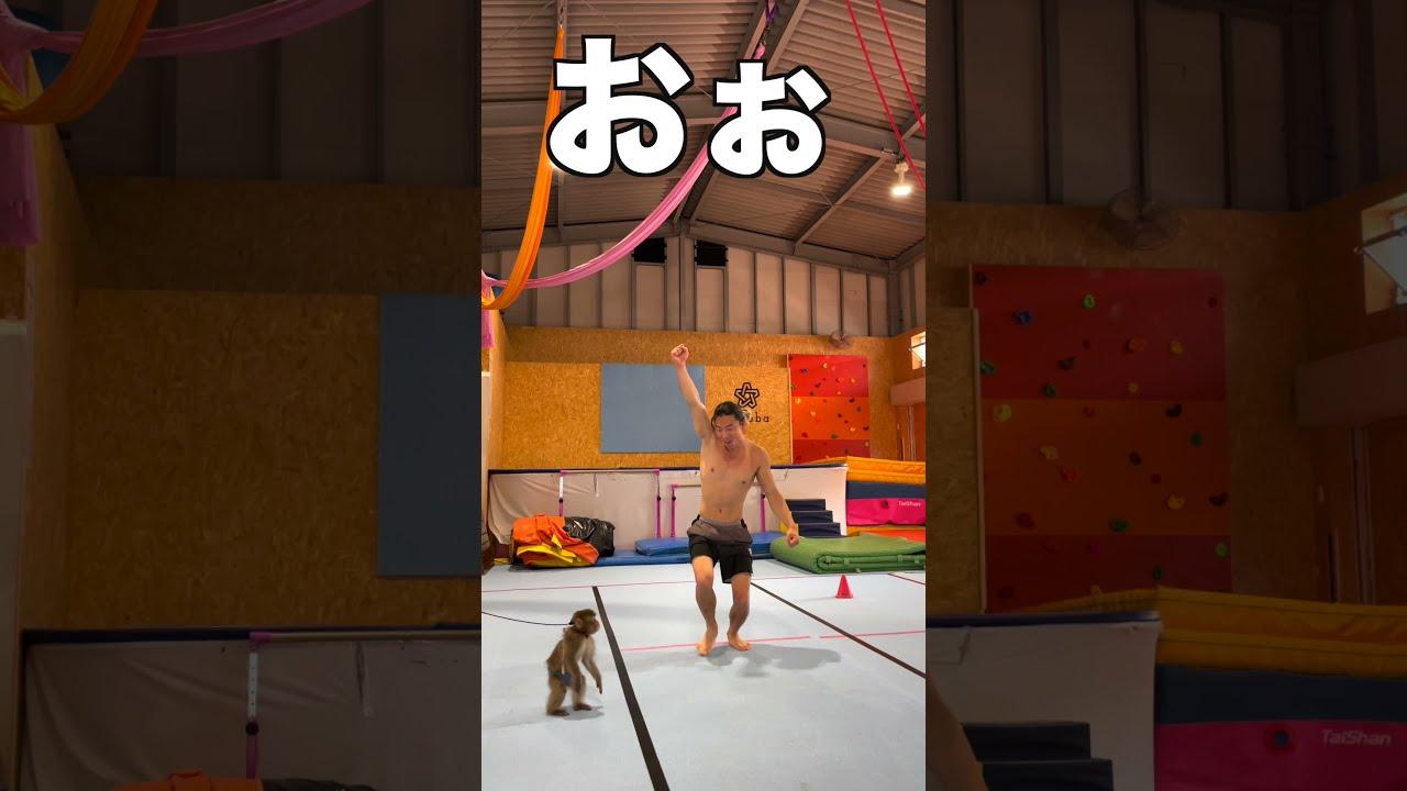 特技はバク転!日本猿とのコラボが凄可愛いすぎる#shorts