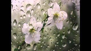 Warm Rain- Warren Hill