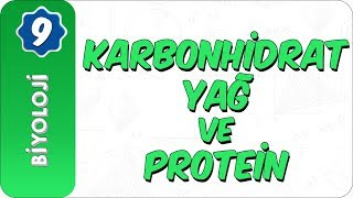9. Sınıf Biyoloji   Karbonhidrat, Yağ Ve Protein