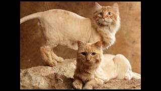 Салоны красоты для животных:  что такое груминг или как стать гламурным питомцем?