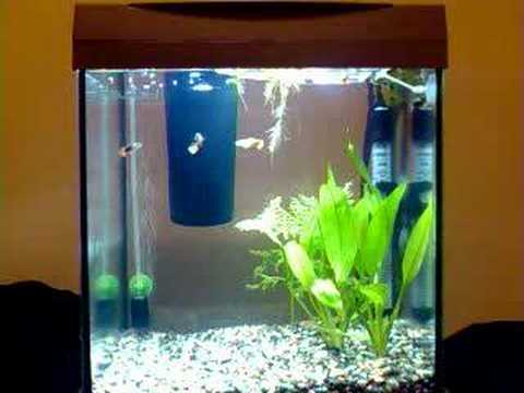 Aquarium tetra aquaart 30 litres 10 gallons youtube for Aquarium boule 20 litres