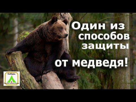 Вопрос: Как вести себя при встрече с медведем в лесу?