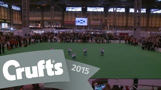 Obedience World Cup - Parade & Presentation | Crufts 2015