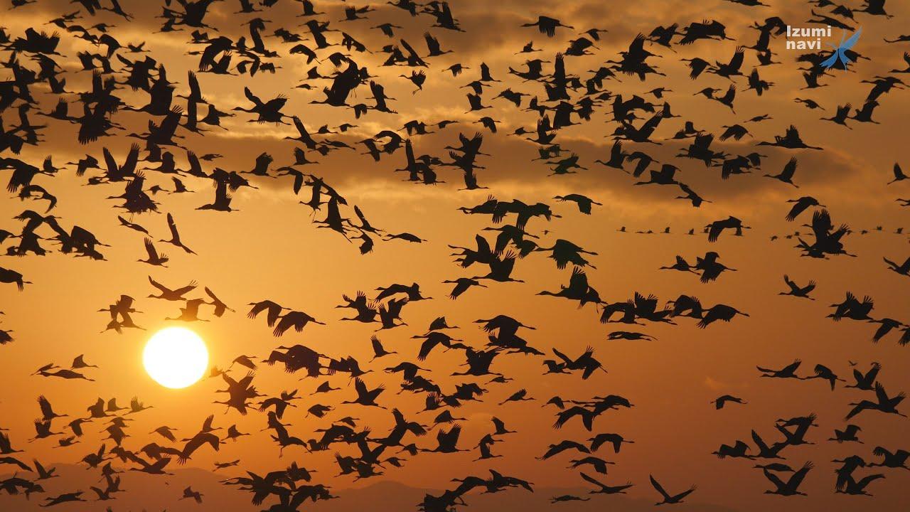Sunrise and the crane (Japan I...